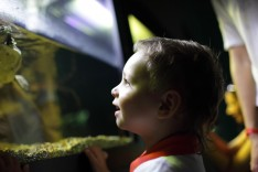 Wasserschildkröten-Terrarium