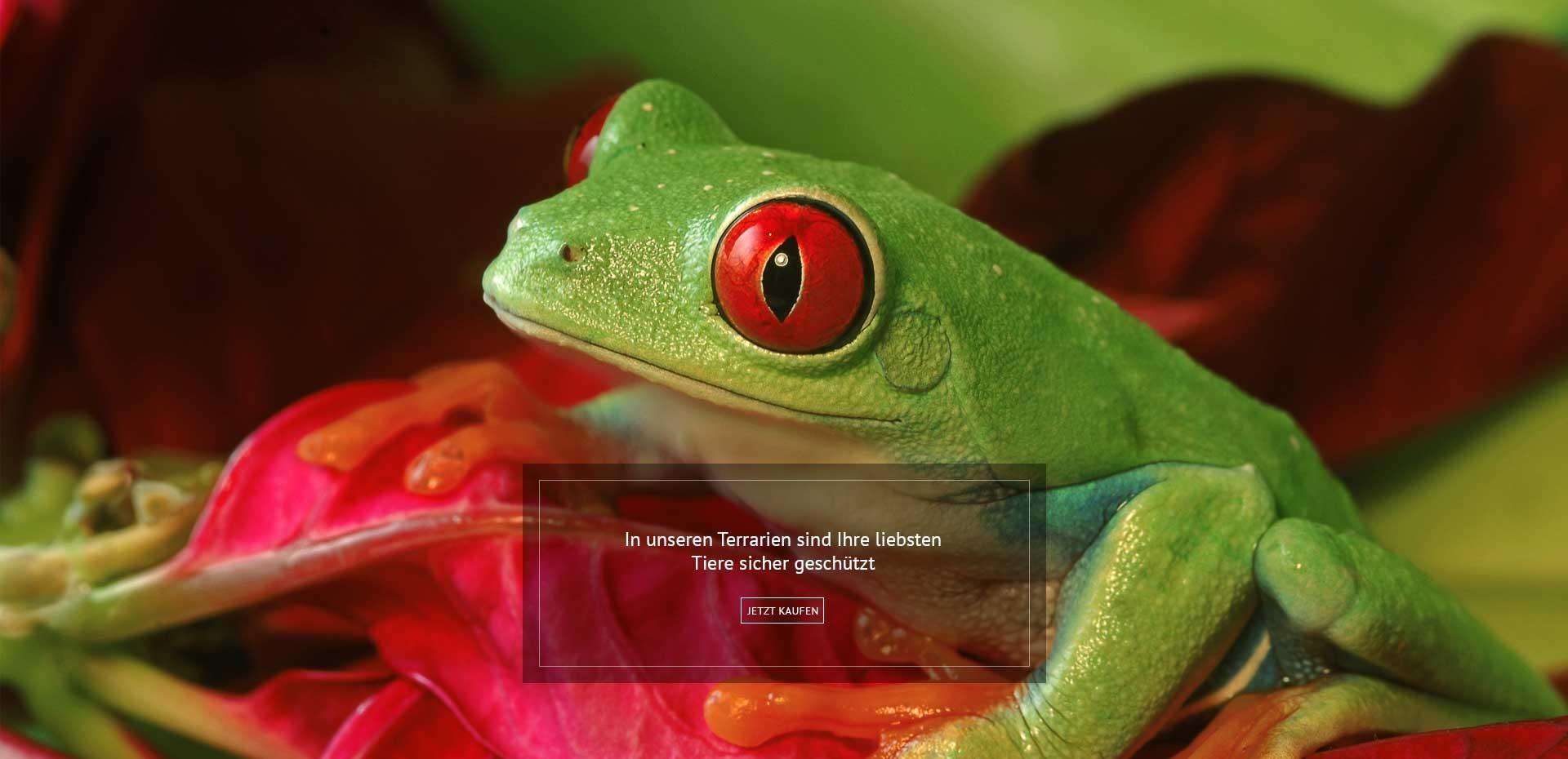 Frosch-Terrarium